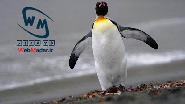الگوریتم پنگوئن2